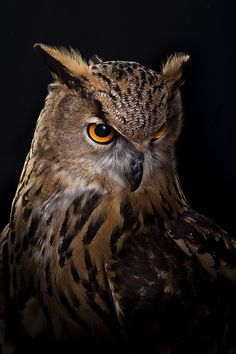 ~ Owl von Javier Senosiain Jimeno ~