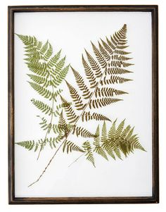 Introduce a bit of Victoriana to your decor with glass panels that feature digital prints of Northeastern fern species. ($590 for four; botanicalstyle.com)   - CountryLiving.com