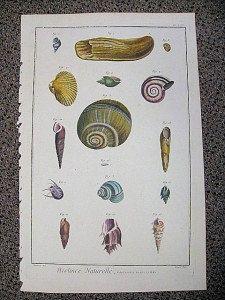 ANTIQUE PRINTS - Large Antique Shell Print Lamarck Histoire by PeggysAntiques, $72.50 #antiqueprints #shells