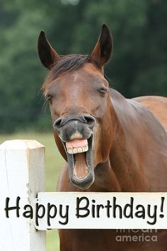 Happy Birthday Smiling Horse Photo by jt photodesign H . birthday quotes birthday greetings birthday images birthday quotes birthday sister birthday wishes Happy Birthday Greetings Friends, Birthday Wishes Funny, Happy Birthday Parties, Happy Birthday Quotes, Birthday Messages, Happy Birthday Cards, 21 Birthday, Horse Birthday, Horse Happy Birthday Image