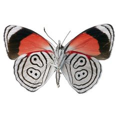 Red White and Black Butterfly Vinyl Decal by WilsonGraphics, $3.00