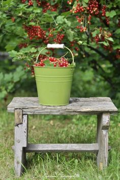 repaint my green bucket just like this and place on my old bench