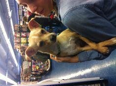 Little Carlito Best Friends, Dogs, Animals, Beat Friends, Animaux, Doggies, Animal, Bestfriends, Animales