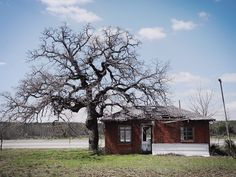 A live oak tree and abandoned building in Cherry Spring, Texas