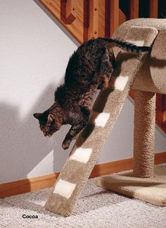 10 Must-Have Products for Senior Cats