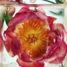 How perfect is this real Coral Charm peony? It was first preserved in silica gel and then cast in resin so that it will look fresh for generations to come. Diy Resin Art, Epoxy Resin Art, Diy Resin Crafts, Diy And Crafts, Resin Flowers, Dried Flowers, Peonies Wallpaper, Coral Charm Peony, Resin Tutorial