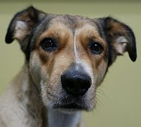 Crash is available for adoption! Call us at (858) 676-1600 if you are interested!