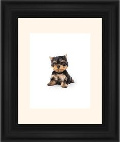Terrier Puppy Framed Print, Black, Classic, None, Cream, Single piece, 8 x 10 inches