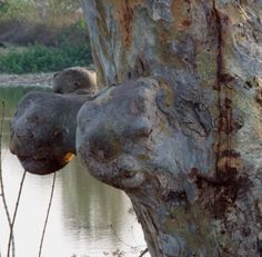 Tree burk...