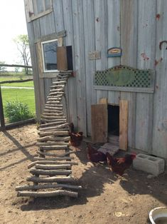Building A DIY Chicken Coop If you've never had a flock of chickens and are considering it, then you might actually enjoy the process. It can be a lot of fun to raise chickens but good planning ahead of building your chicken coop w Chicken Barn, Diy Chicken Coop Plans, Portable Chicken Coop, Chicken Coop Designs, Backyard Chicken Coops, Chickens Backyard, Chicken Fence, Best Egg Laying Chickens, Keeping Chickens