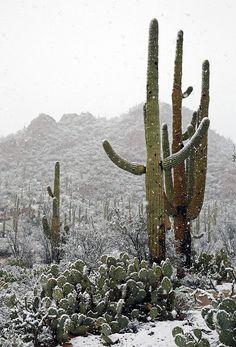 winter in the desert is amazing