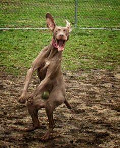 hilarious dog    www.thedogsbark.com/