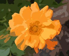 Simplicity of Color and Shape of Orange Rose by Mary Sedivy.