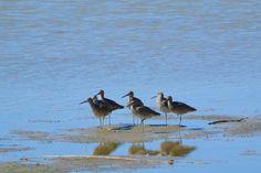 USFWS Bear River Migratory Bird Refuge, Utah. Photo: Jennifer Bunker