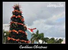 Carnival Breeze in Grand Turk Caribbean Christmas, Carnival Breeze, Christmas Tree, Holiday Decor, Pictures, Photography, Teal Christmas Tree, Photos, Fotografie