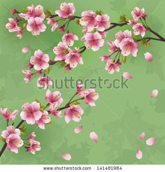 Vintage Japanese background with sakura blossom - Japanese cherry tree. Greeting or invitation card, vector illustration