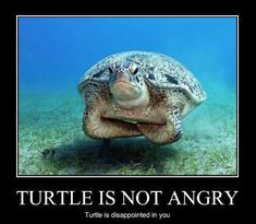 turtle is disappointed