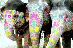 söta elefanter som jag vill ha. ha ha.