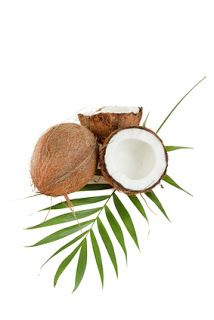 Known for their sweet white meat, coconuts are more than just tasty treats. In fact, research shows they may even combat tooth decay. Who knew? #coconutoil #teeth #health