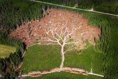 Hurricane Tree by Jocke Bergland: aerial shot of a forest in southern Sweden in the aftermath of 2005's Cyclone Gudrun