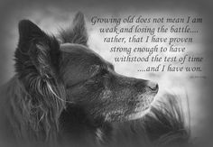 Test Of Time Art Print by Sue Long. All prints are professionally printed, packaged, and shipped within 3 - 4 business days. Choose from multiple sizes and hundreds of frame and mat options. Dog Quotes, Animal Quotes, True Quotes, I Love Dogs, Cute Dogs, Lone Wolf Quotes, Wolf Spirit Animal, Native American Quotes, Warrior Quotes
