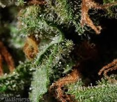 Visit Jointcannabisdispensary.com and Buy the Highest Quality Marijuana strains ,Order weed online,Buy cannabis online,Buy marijuna online. White Widow,sour Diesel,Harlequin,Blue dream,Lemonn haze,granddaddy purple,Cannabis oil for patients with illness like cancer,pain,anxiety, liver problem,epilepsy and more Order weed online, Buy weed online,Buy Marijuana online,buy moonrocks online ,Go to..https://www.jointcannabisdispensary.com Text or call +1(408)909-1859