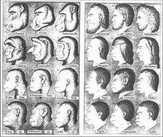 haeckel1.jpg (600×507)