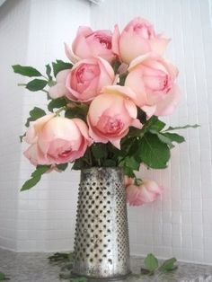 ♥ cabbage roses