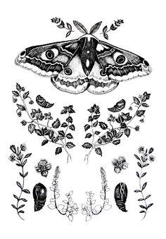 Emperor Moth & Gypsy Weed Print.