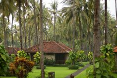 a tranquil garden of coconut palms