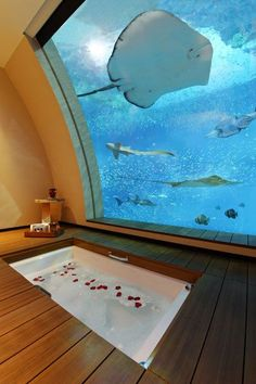 """Hotels with unusual views. The Sentosa Resort in Singapore unveiled 11 two-storey """"Ocean Suites"""" this week, each with a window on to the hotel's aquarium. Vacation Destinations, Dream Vacations, Vacation Spots, Design Hotel, Hotels And Resorts, Best Hotels, Amazing Hotels, Cool Hotels, Marriott Hotels"""