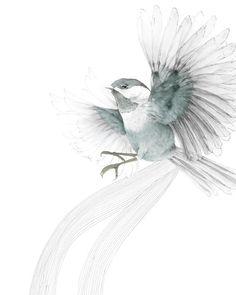 Beth-Emily Illustration Bird in Flight I 2009 Wow Art, Bird Illustration, Bird Drawings, Birds In Flight, Blue Bird, Art Photography, Sketches, Art Prints, Image