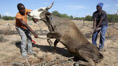 Sécheresse : état de catastrophe naturelle au Zimbabwe Check more at http://info.webissimo.biz/secheresse-etat-de-catastrophe-naturelle-au-zimbabwe/