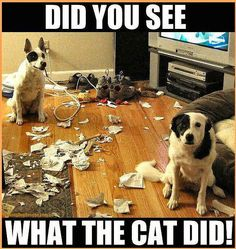 Did you see what the cat did?