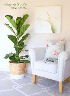 DIY-planter-fiddle-leaf-fig-tree Ikea hack for a lovely little corner via @Kathryn Hawkes