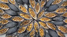 Patterns, mandalas created out of natural ingredients without any human-made additive, photographed, returned to Nature. Leaves no ecological footprint.