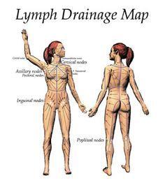 Lymphatic Drainage, massage direction. | Meditation and yoga ...