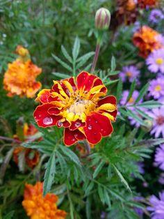 :) Flowers, Plants, Plant, Royal Icing Flowers, Flower, Florals, Floral, Planets, Blossoms