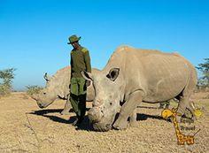 Друзья это белый носорог всего их в Кении 6 штук , это вымирающий вид  Очень жалко. http://travelkenya.ru/  {{AutoHashTags}}