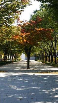 Seoul forest