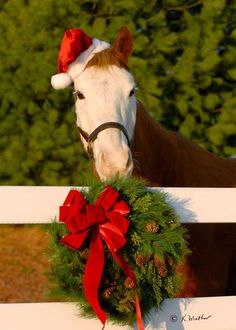 Merry #Christmas #horse #equine http://globalhorsecents.com