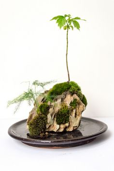 I experimented with some Dragon rock I picked up at greenaqua.hu – emersed again :) dailykokedama: Another nice rock creation, this time from Dragon / Ohko stone. It is now built with a drainage system, for easier watering :) Plants, Succulent Terrarium, Bonsai Pots, Kokedama, Mini Garden, Moss, Moss Garden, Bonsai Garden, Miniature Trees