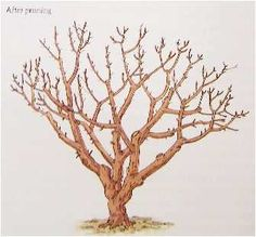 How to Prune a Tree---after