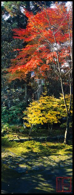 Read More About Anraku-Ji Zen Gardens in Kyoto, Japan Beautiful World, Beautiful Gardens, Beautiful Places, Beautiful Pictures, Places Around The World, Around The Worlds, Palmiers, Panoramic Images, Japan Photo