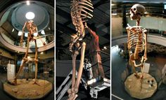 Hidden History revealed: 7-meter-tall GIANT skeletons on display | Ancient Code