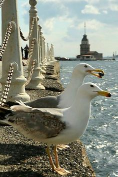 """[ """"A Little Bit Of This... And A Little Bit Of That... Seasons... Colors... Great Photos...Fashion....Unusual Photos Disclaimer...I do not claim copyright or ownership of any content of this board..."""", """"double wing by Yaşar Koç on"""", """"Venice, a great place for couples"""", """"Seagulls and maiden"""