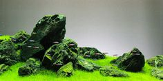 Understanding Iwagumi Aquascaping Style | The Aquarium GuideUnderstanding Iwagumi Aquascaping Style | The Aquarium Guide