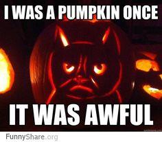 Funny pictures about Grumpy cat celebrates Halloween. Oh, and cool pics about Grumpy cat celebrates Halloween. Also, Grumpy cat celebrates Halloween photos. Cat Pumpkin Carving, Best Pumpkin, Pumpkin Ideas, Pumpkin Pumpkin, Funny Halloween Memes, Funny Grumpy Cat Memes, Halloween Cat, Halloween Ideas, Humor