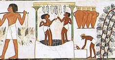 Wine Making in Ancient Egypt (Inside the tomb of Nakht in Sheikh Abd el-Qurna -Luxor)  Wine and ancient Egypt have a very rich history. Wine was known to be downed by the Egyptians as advance as 3000 BCE. The Egyptian word for wine jrp forgoes any other known moniker to have been yellow for wine. By the time of the 18th dynasty wine had grown a popular consumer merchandise in ancient Egypt with both red wines and white wines sovereign to bad people. To hold wine they blamed a bunch of grapes…
