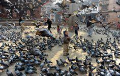 Niños nepaleses juegan con las palomas en la Plaza de Durbar, en Katmandú.-